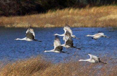 Bates Birding hobby Jan 2015